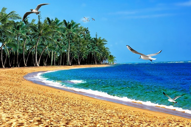 beach-1030399_640